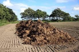 A szerves trágya kiváló talajjavító