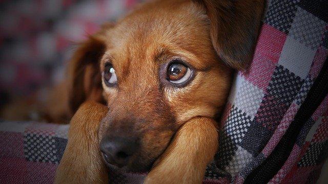 Ön tudja, miért remeg a kutya?